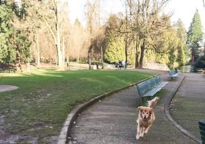 Bailey @ Laurelhurst Park