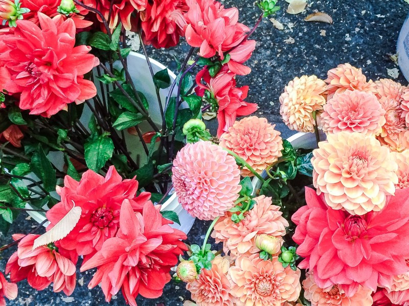 Dahlias at PSU Farmers Market, Portland
