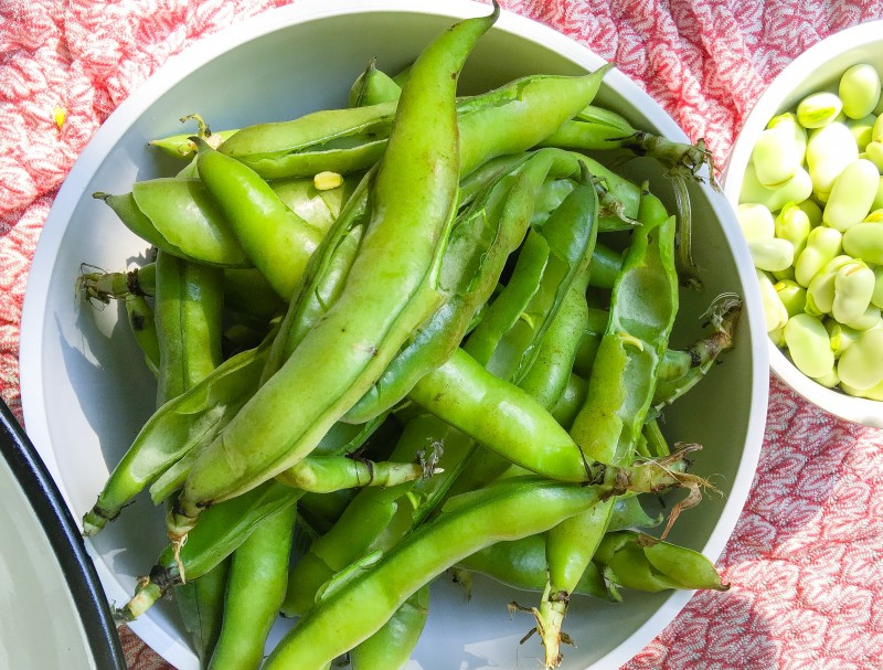 Fava Beans on Front Porch