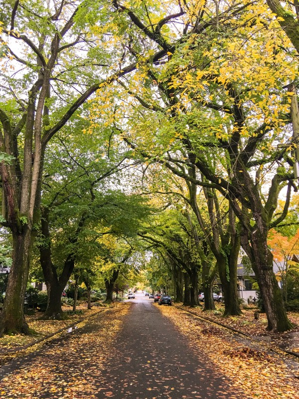 Our Street, Portland, Fall