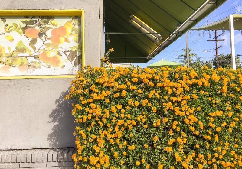 Beverly Hills Lemonade