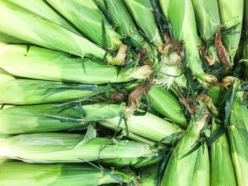 Corn at farmers market