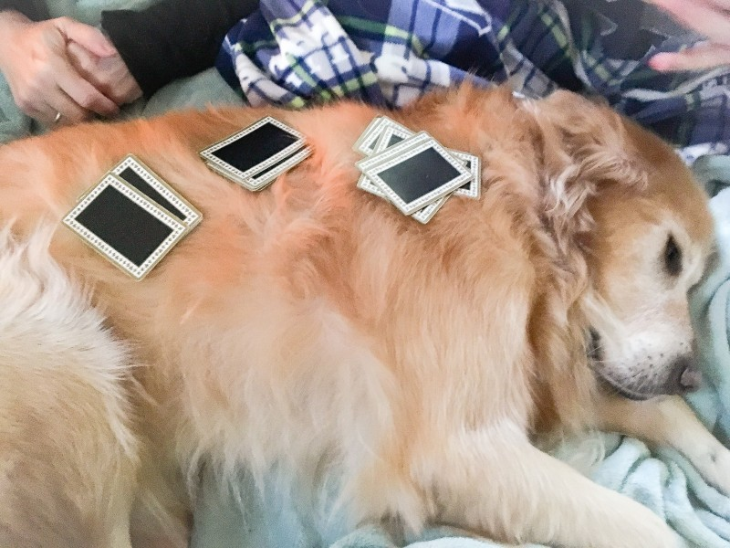 Bailey with Card Game