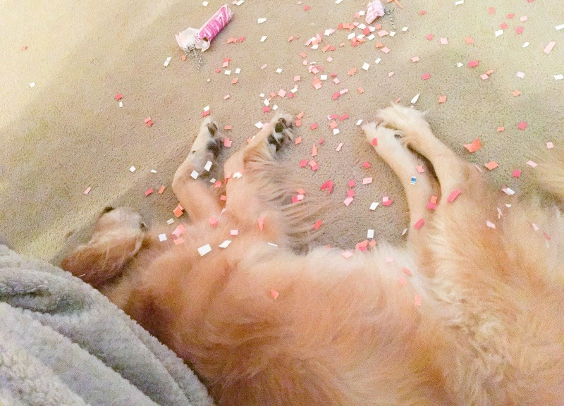 Bailey with New Years confetti