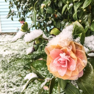 Flower in Snow Portland