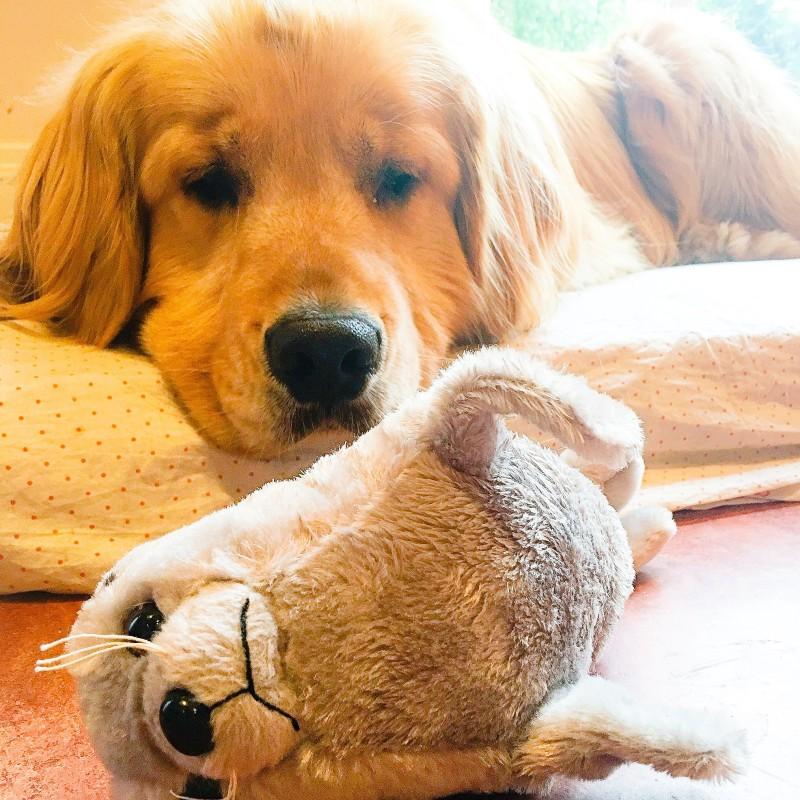 porter and stuffed animal