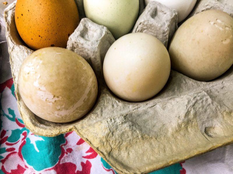 food swap eggs