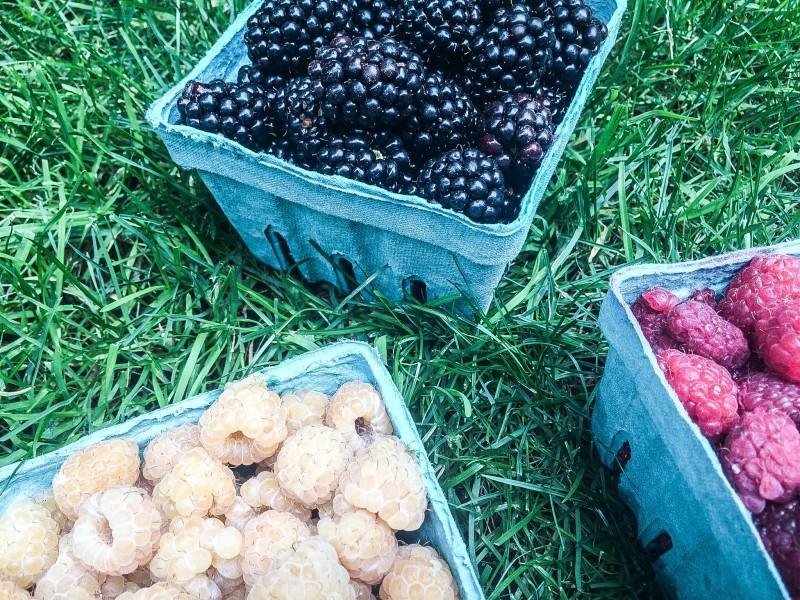 Blackberries and Raspberries in Portland yard, berry season!
