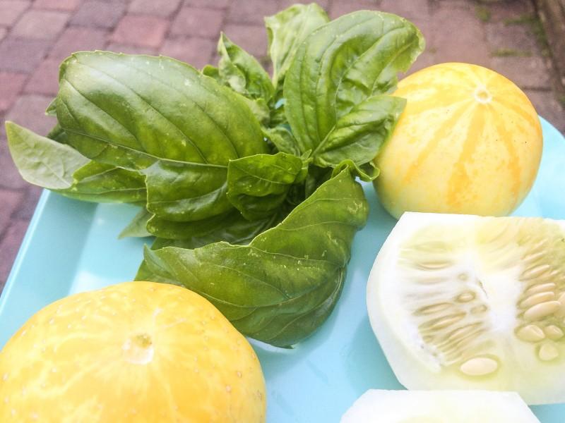 Lemon Cucumbers and Basil from Summer Garden