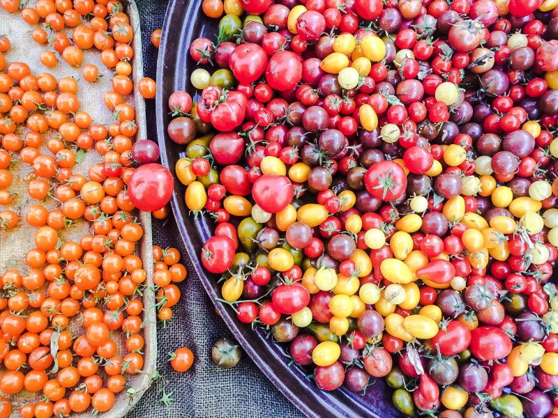 Rainbow Tomatoes at PSU Farmers Market, Portland