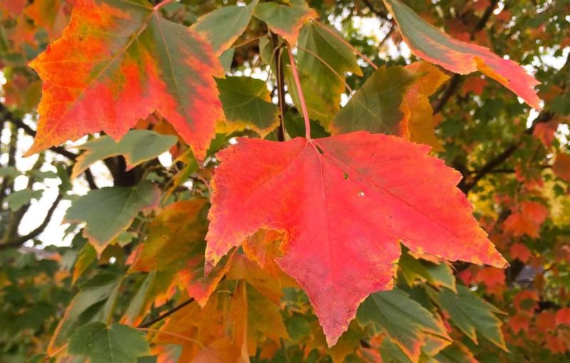 Leaf Watching Portland