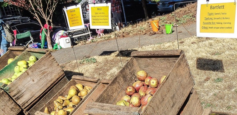 Hood RIver Apples and Pears in Portland