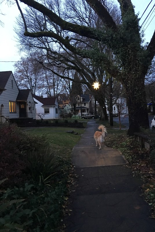Neighborhood Walk with Star