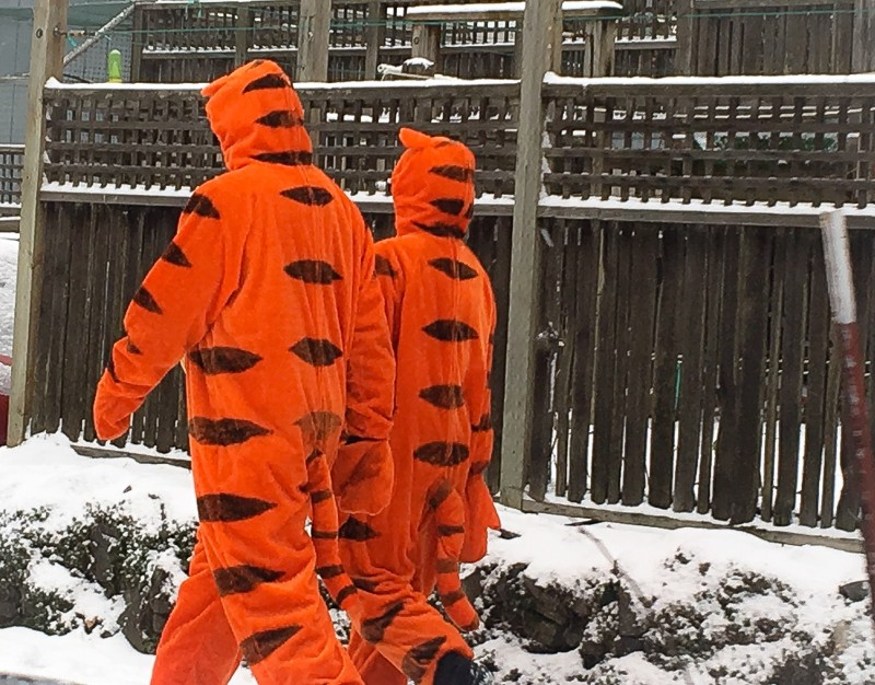 Two Tiggers in the Snow