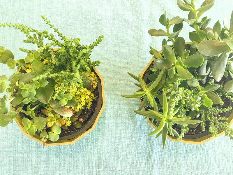 Succulents at Beach House, Rockaway Beach Rental