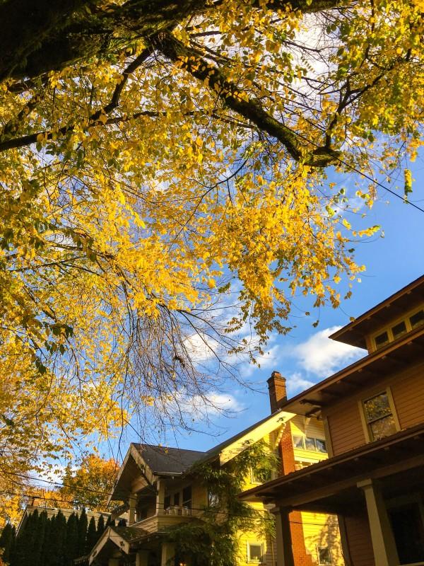 Neighborhood Fall Portland