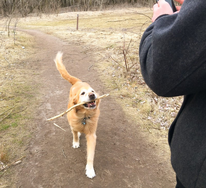 Bailey with stick