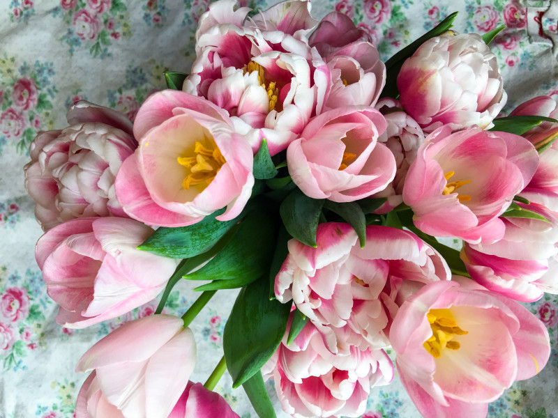 Tulips for Valentines Day