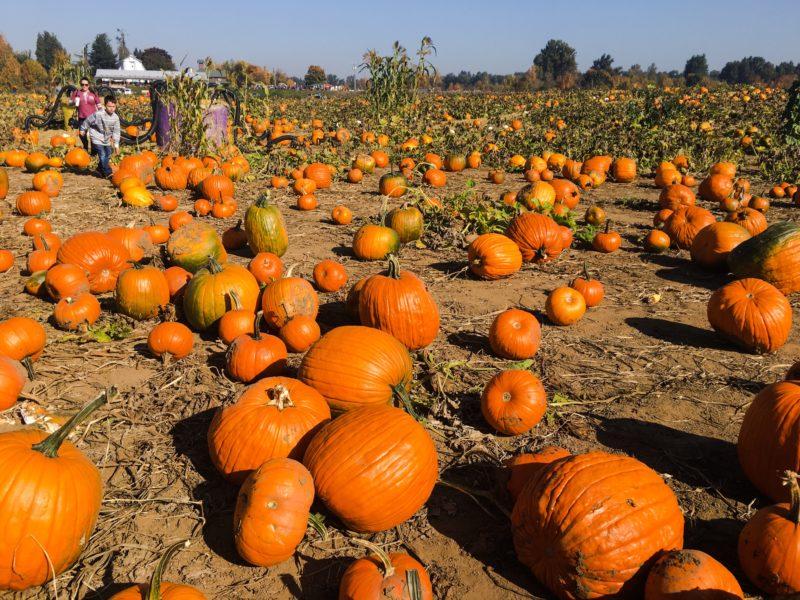 Heiser Farm Pumpkin Patch