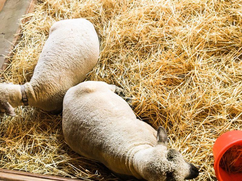 Heiser Farm Petting Zoo Pumpkin Patch