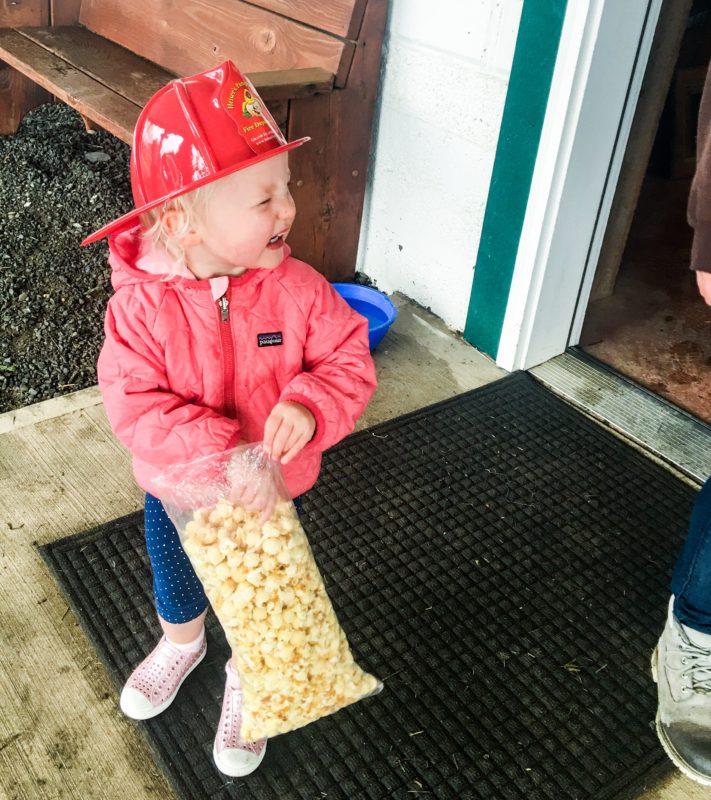Pumpkin Patch and Kettle Corn Popcorn