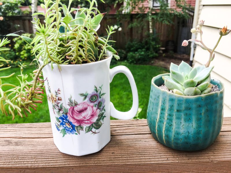 succulence gifts