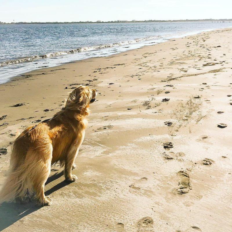 Porter beach vacation