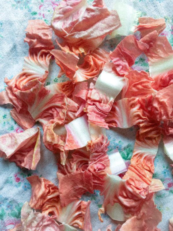 Pink Radicchio Lettuce