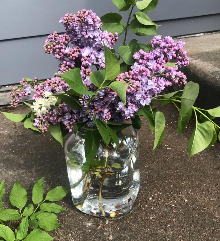 lilac drop off