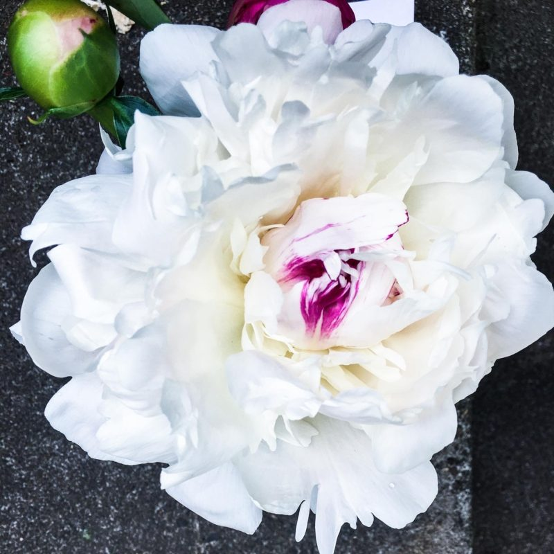 peonies gifted