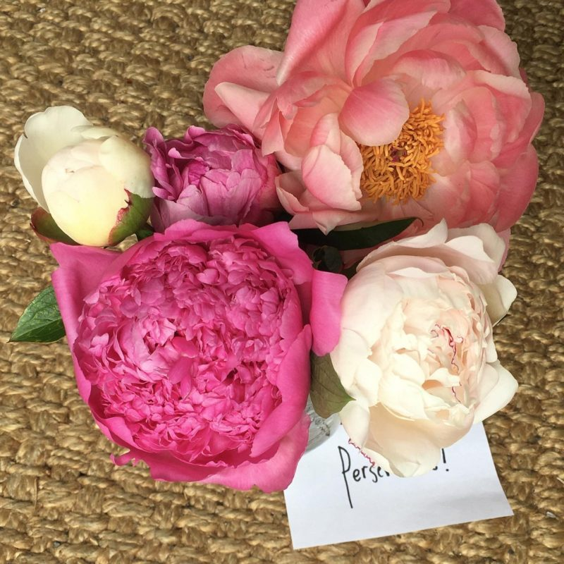 gifted peonies