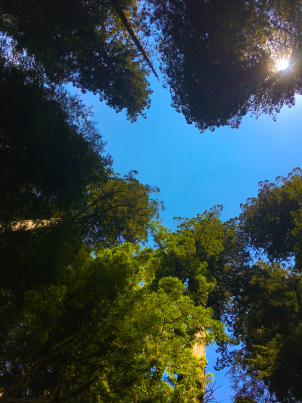 redwoods girls getaway